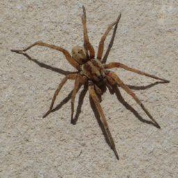 Уничтожение пауков в Покачах